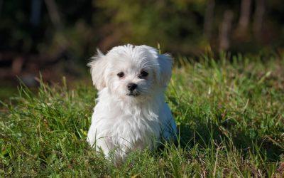 Dogs: Regional Cultural Hang-Ups